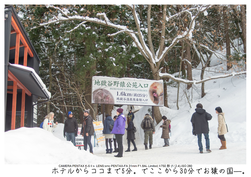snowmonkey jigokudani18.jpg