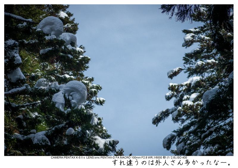 snowmonkey jigokudani26.jpg