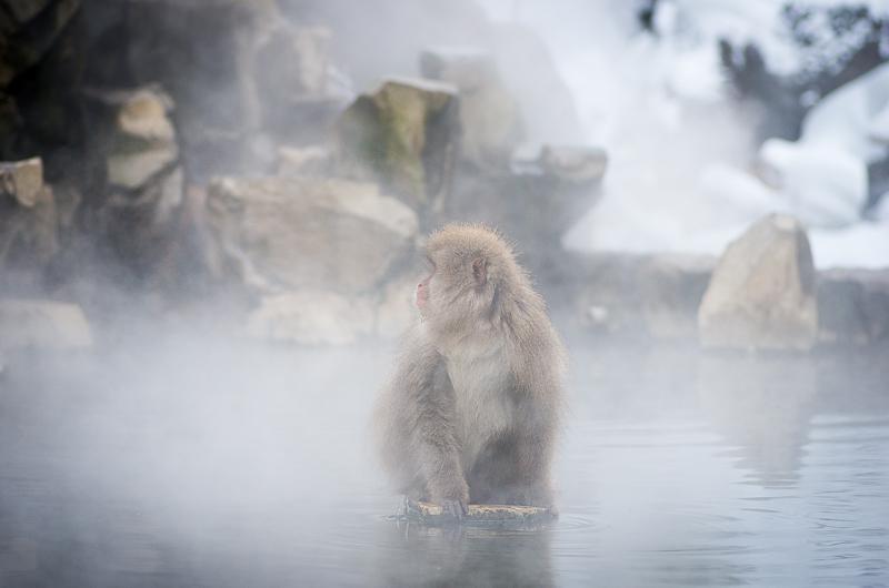 snowmonkey jigokudani32.jpg
