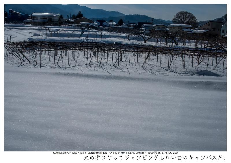 snowmonkey jigokudani5.jpg